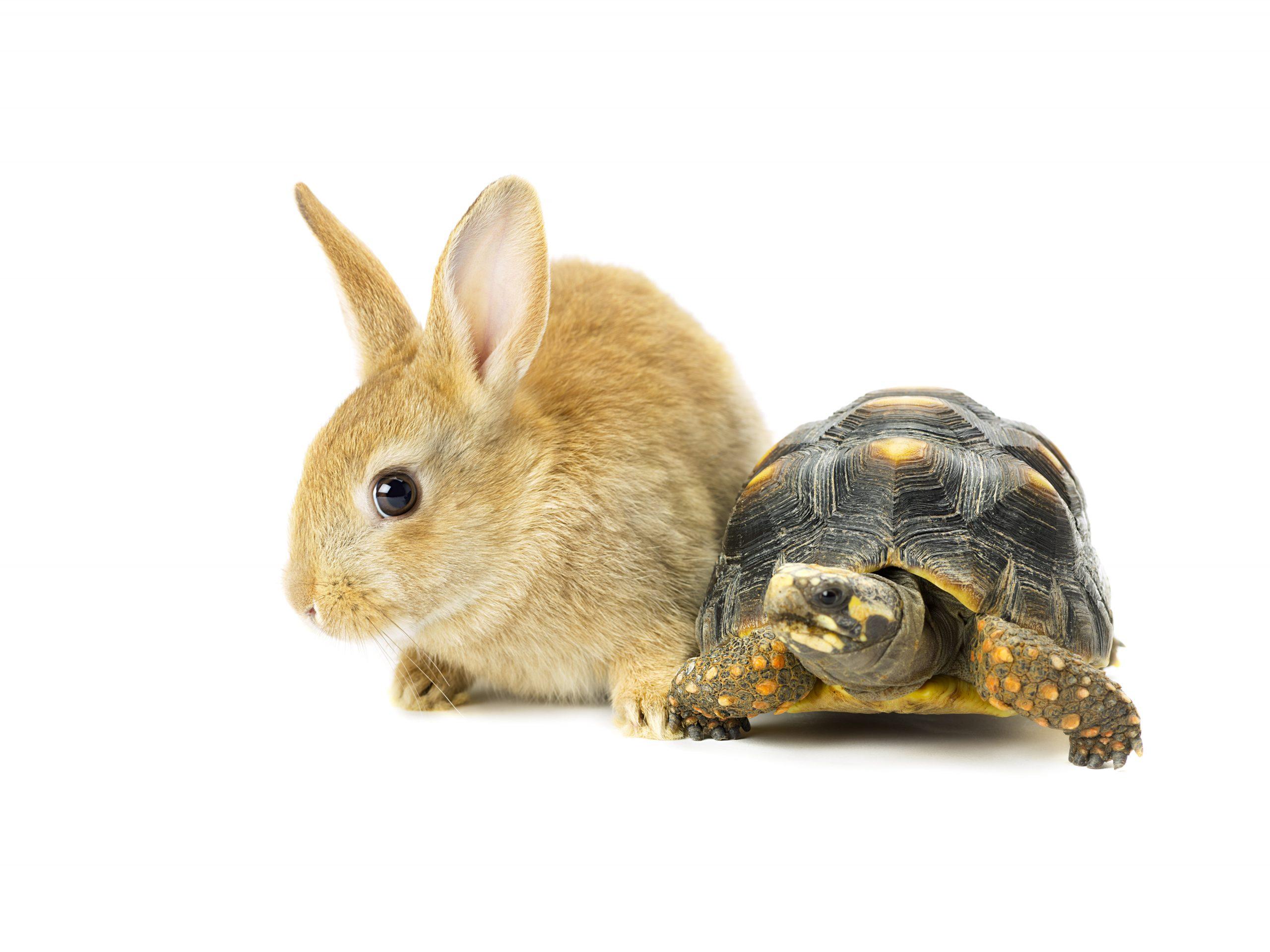 tortise vs hare